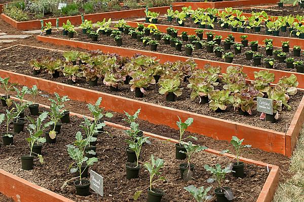 Soil test your vegetable garden for Vegetable garden soil