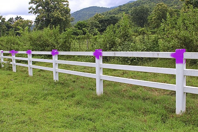 Purple Fence